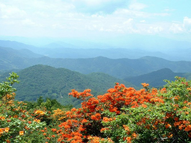 mountain_view_tn
